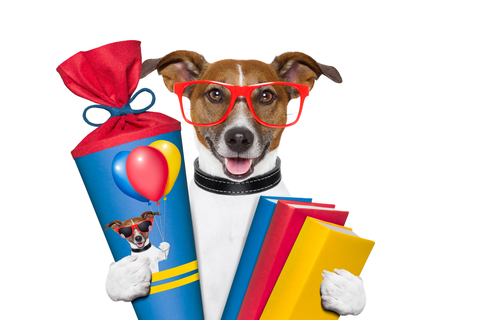 Dog in Glasses Holding Books